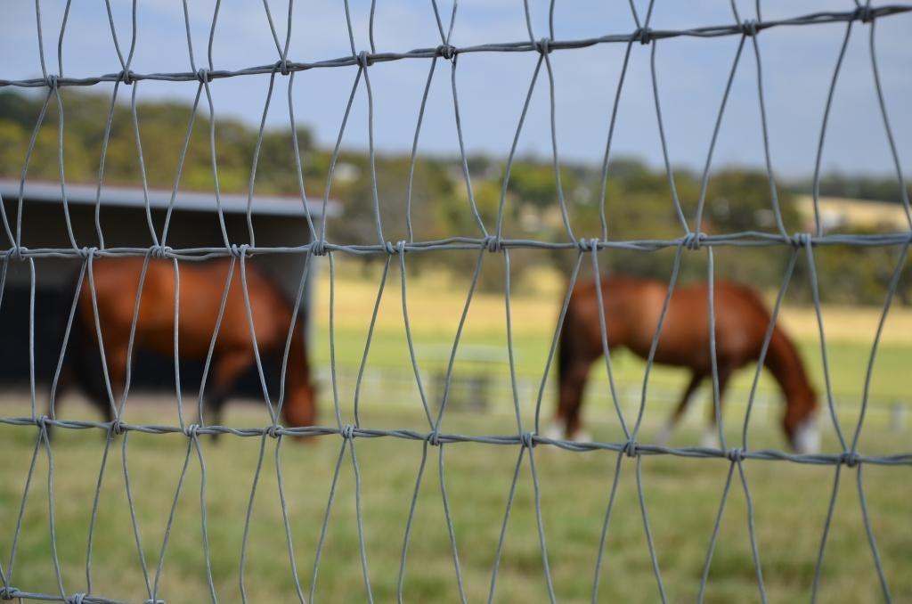Tinklinė tvora